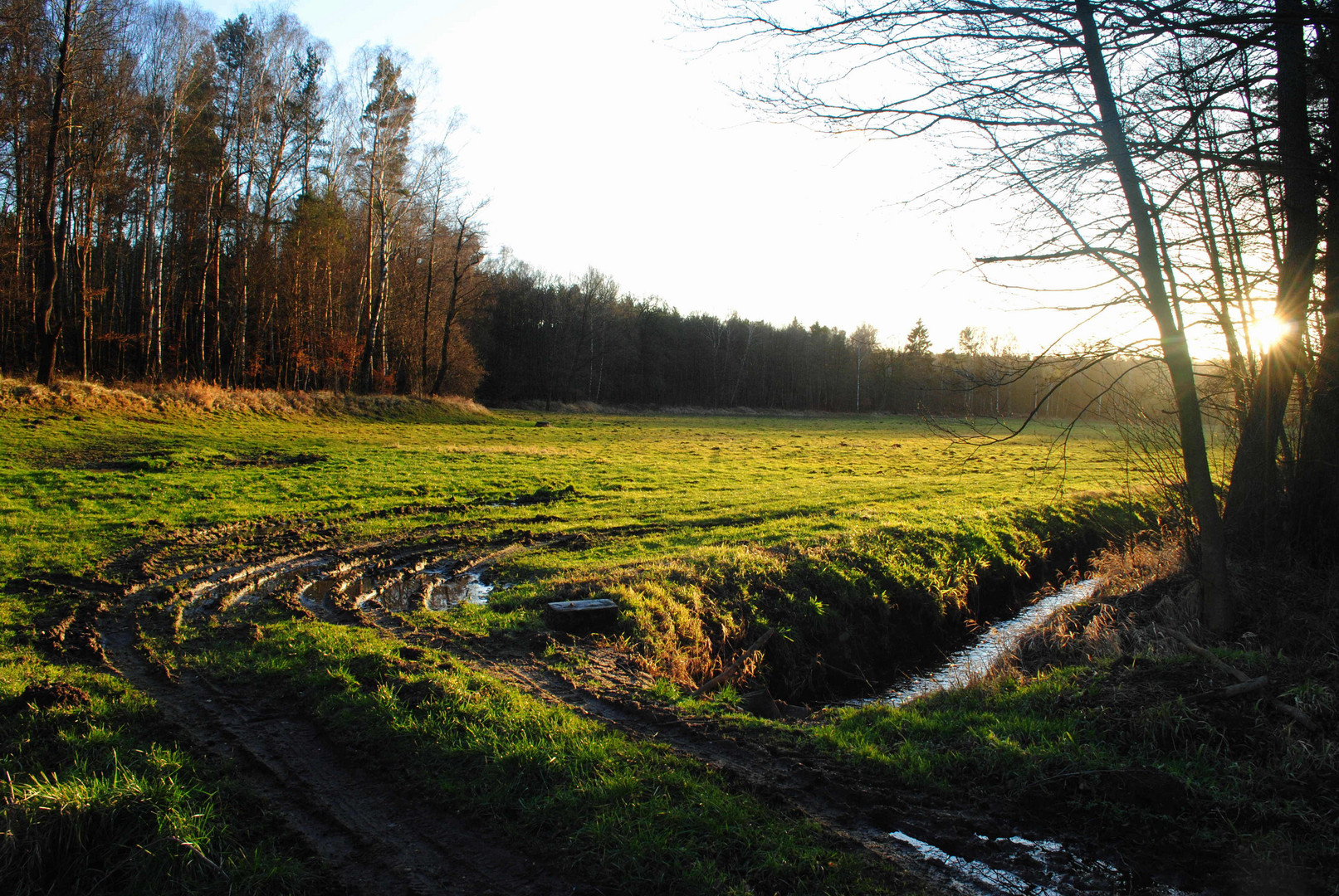 Waldspaziergang II