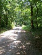 Waldspaziergang im Sommer