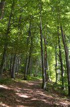 Waldspaziergang im Spätsommer