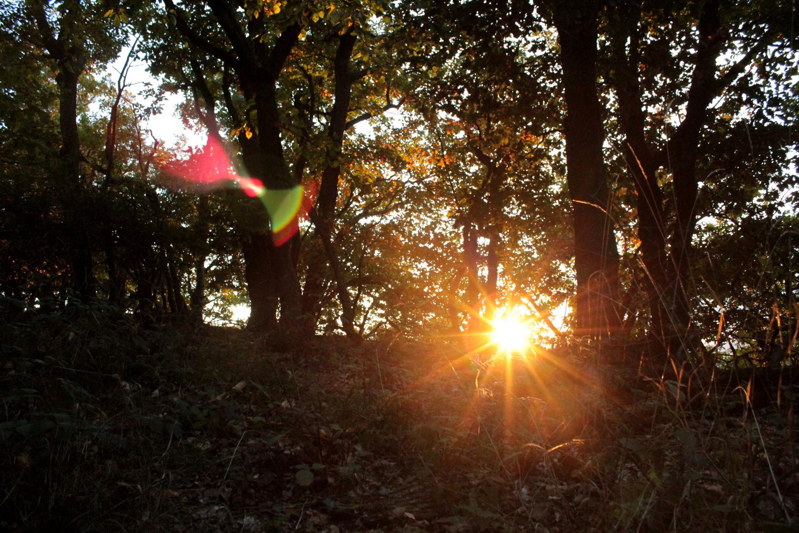 Waldspaziergang in sonnigem Herbst
