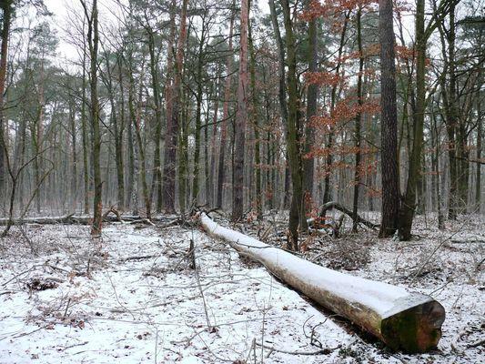 Waldspaziergang2a