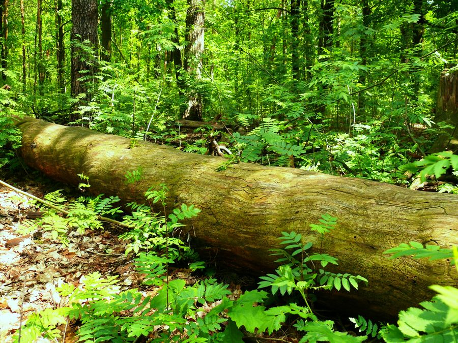 Waldspaziergang5