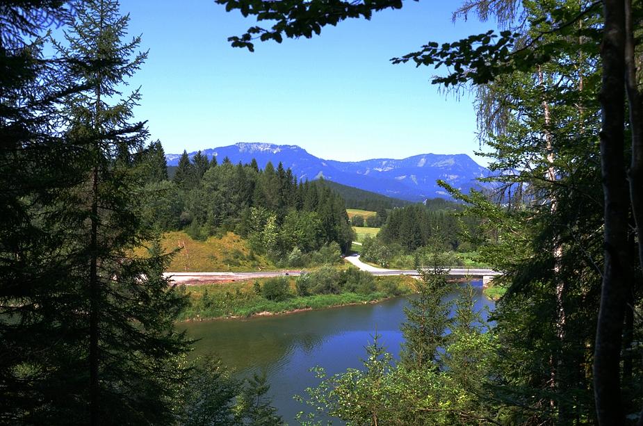 Waldsteig #1