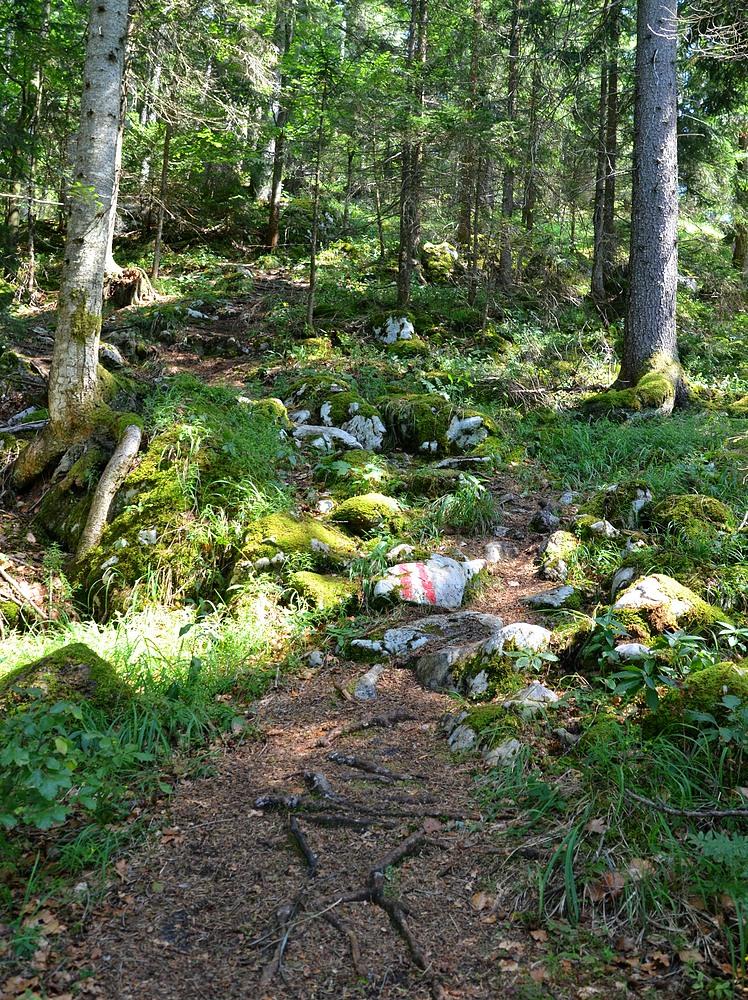 Waldsteig #6