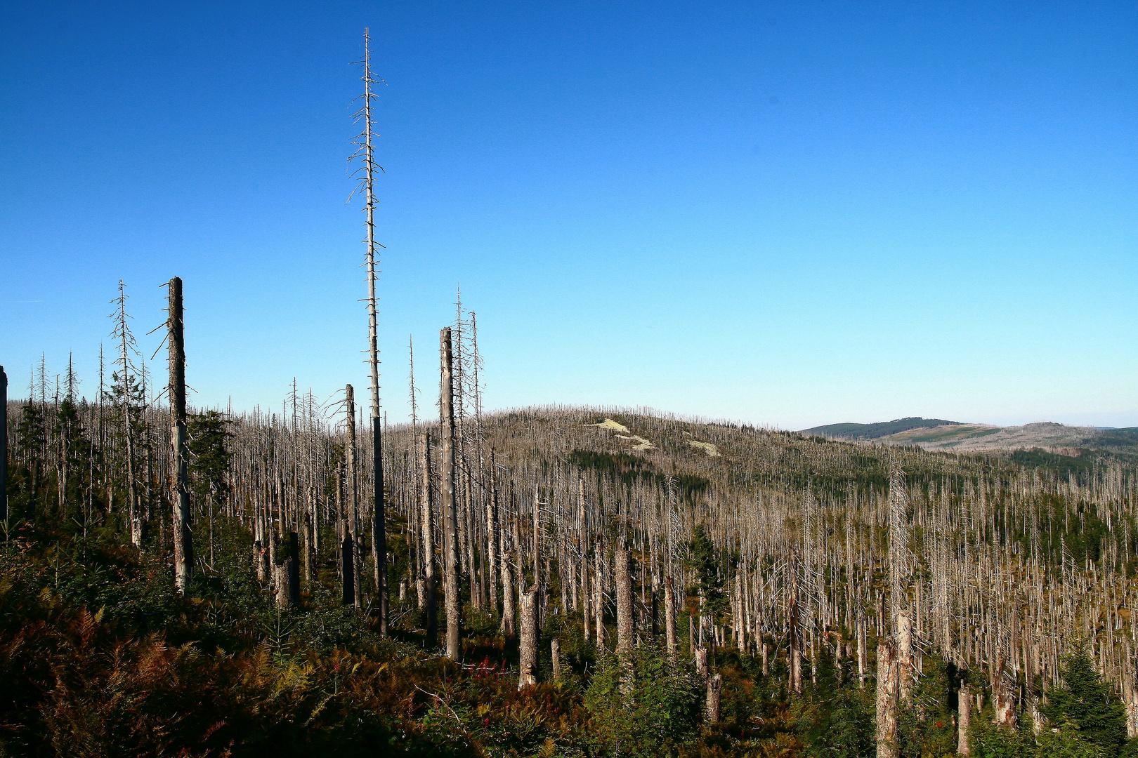Waldsterben am Lusen