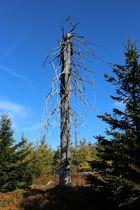 Waldsterben im Isergebirge