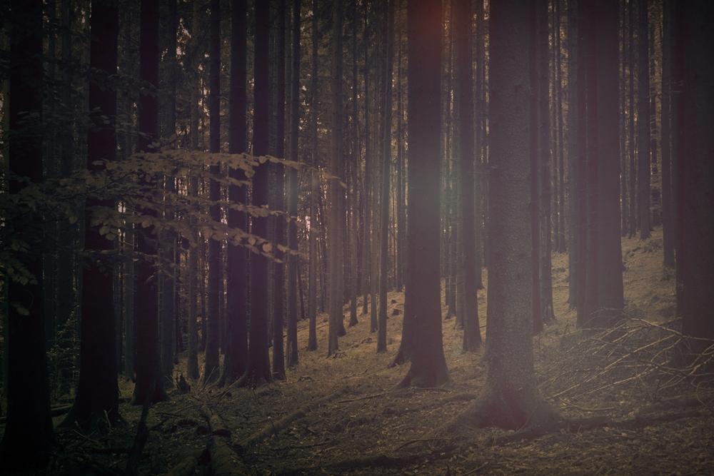 Wald.stimmung