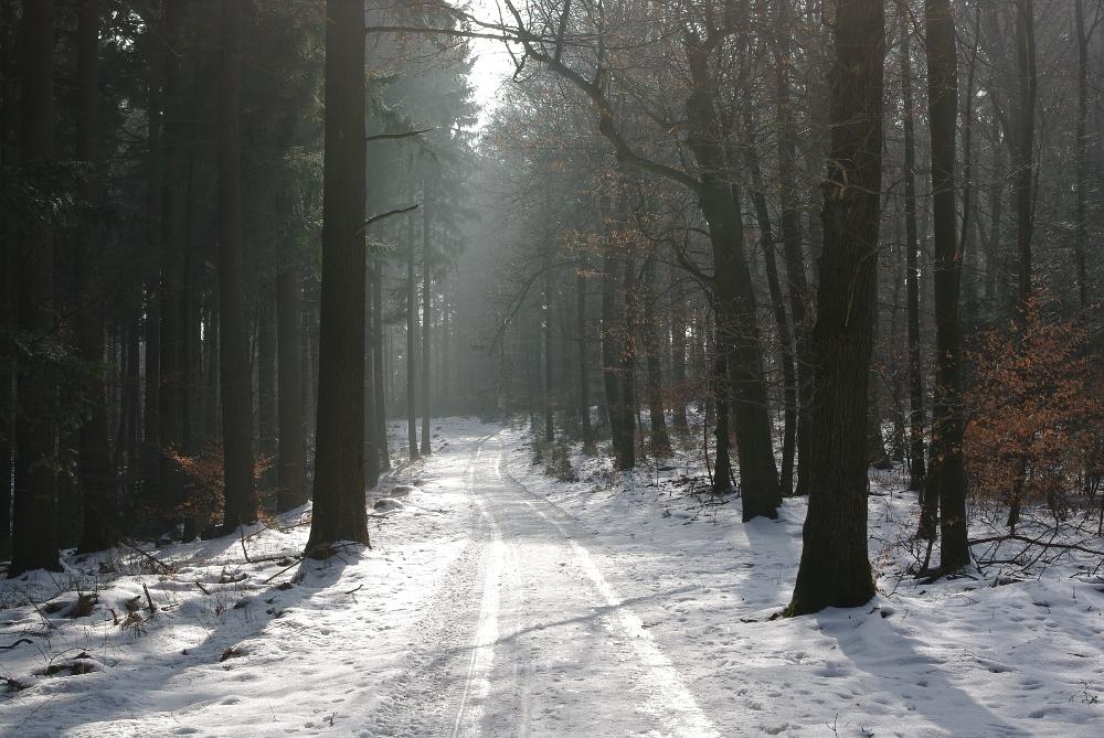 Waldstimmung heute