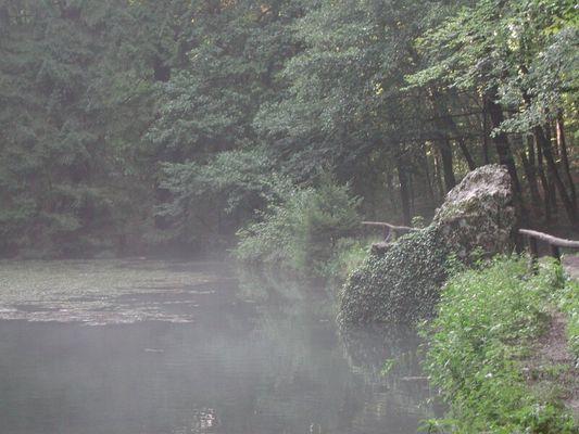 Waldstimmung mit Teich