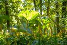 Waldstimmung (Rombergpark Dortmund)