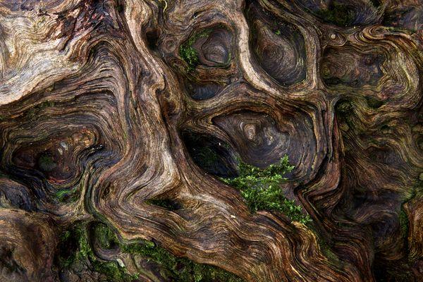 Waldstruktur