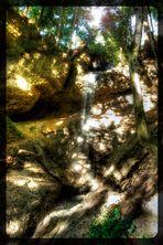 Waldstück - Auffahrt Pfänder