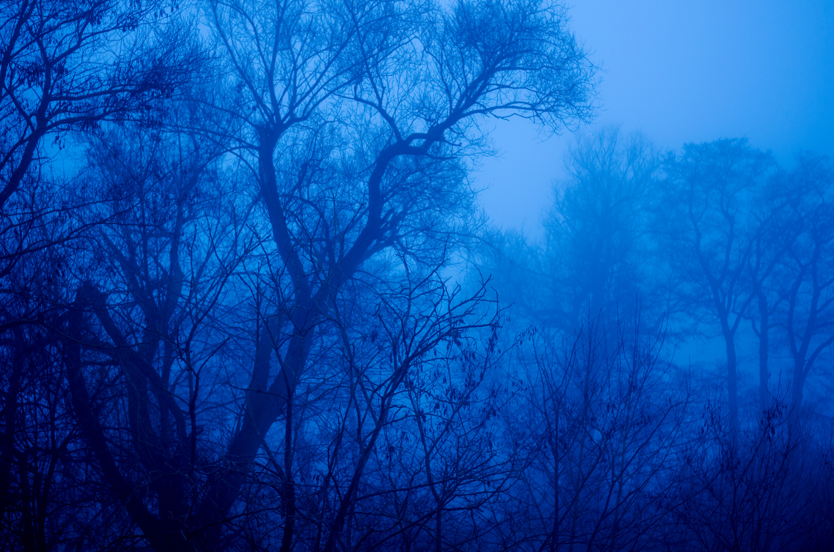 Waldstück im Nebel