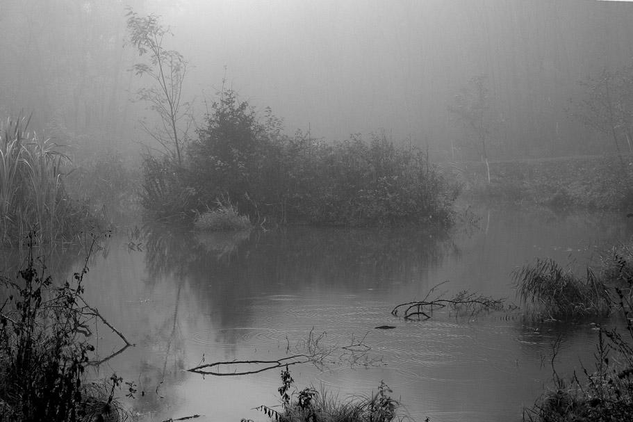 Waldteich im Nebel