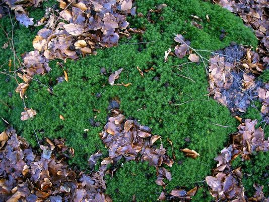 Waldteppich