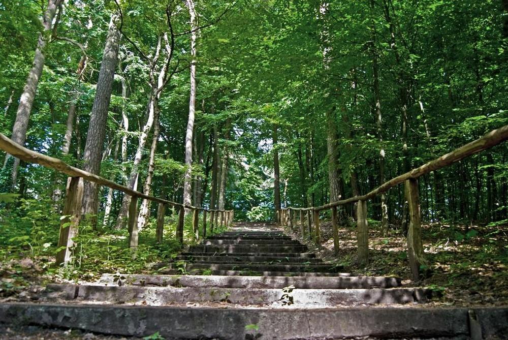 Waldtreppe