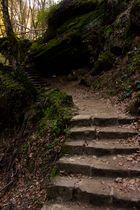 Waldtreppe zum Schiessentümpel