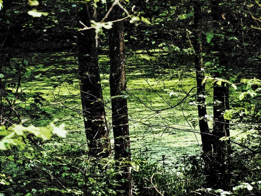 Waldtümpel