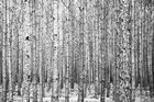 Waldwand
