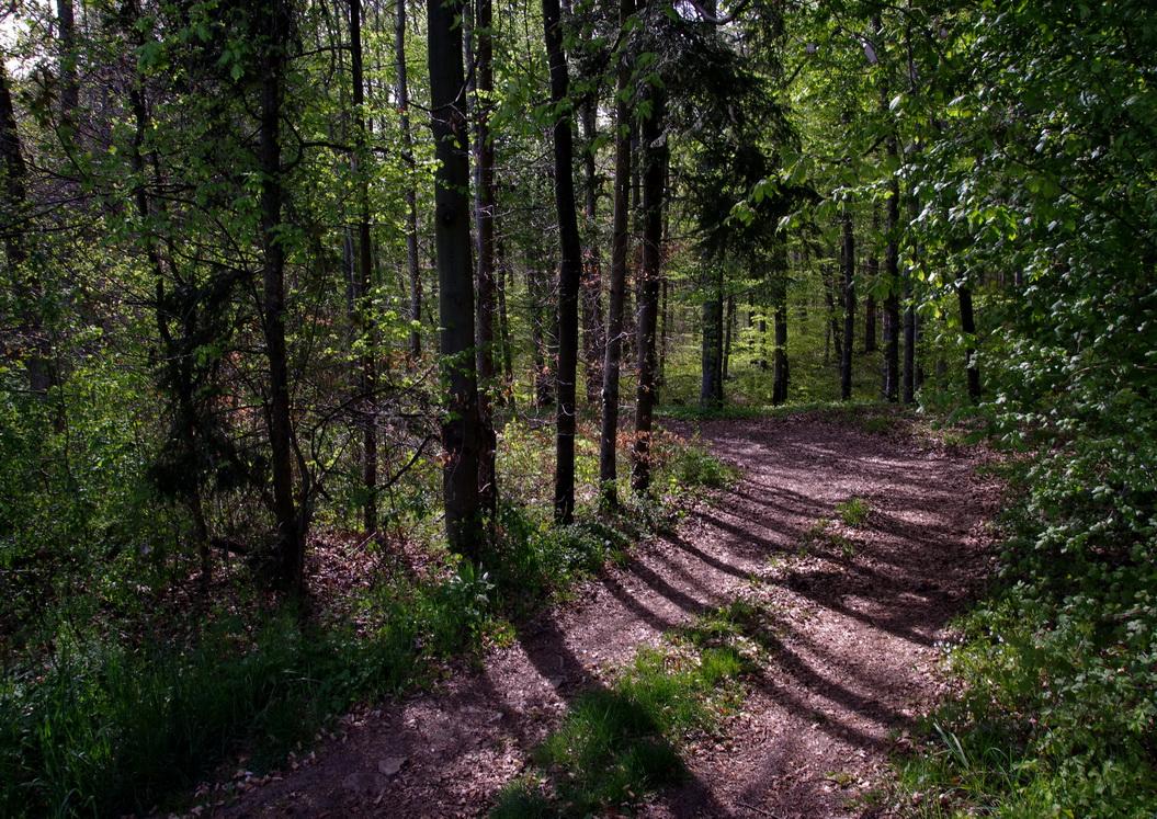 Waldwanderweg im Schönbuch