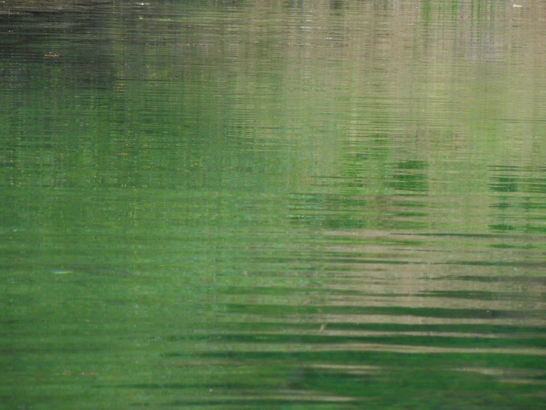 Waldwasser