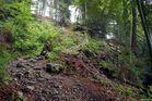 Waldweg 02