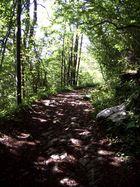 Waldweg (1)