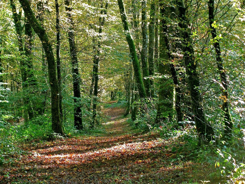 ...Waldweg !!!...
