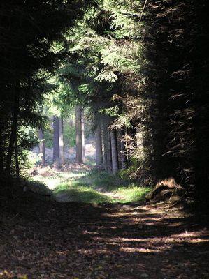 ...Waldweg