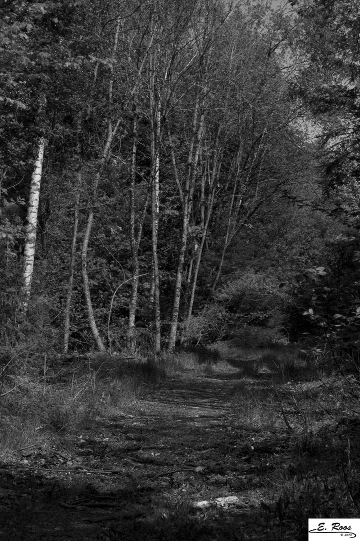 ...Waldweg...