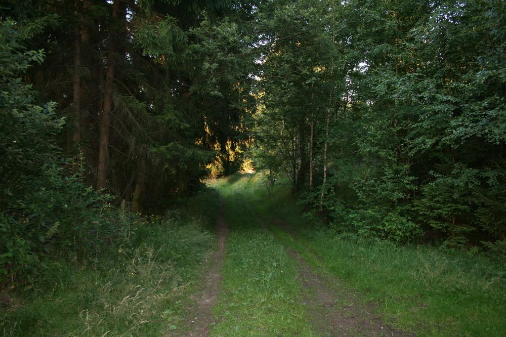 Waldweg am Tragber