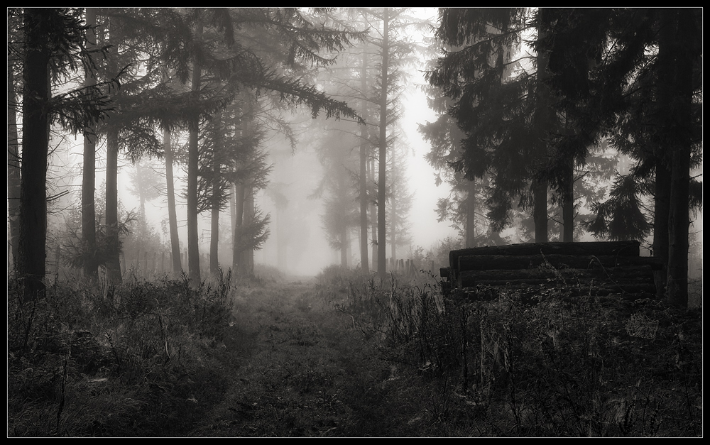 Waldweg [B-08]