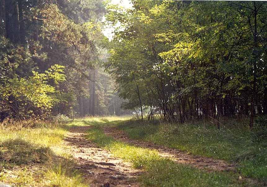 Waldweg bei Belzig