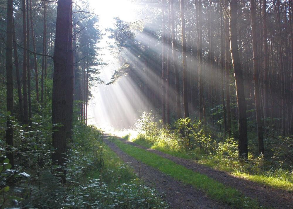 Waldweg bei Kühren