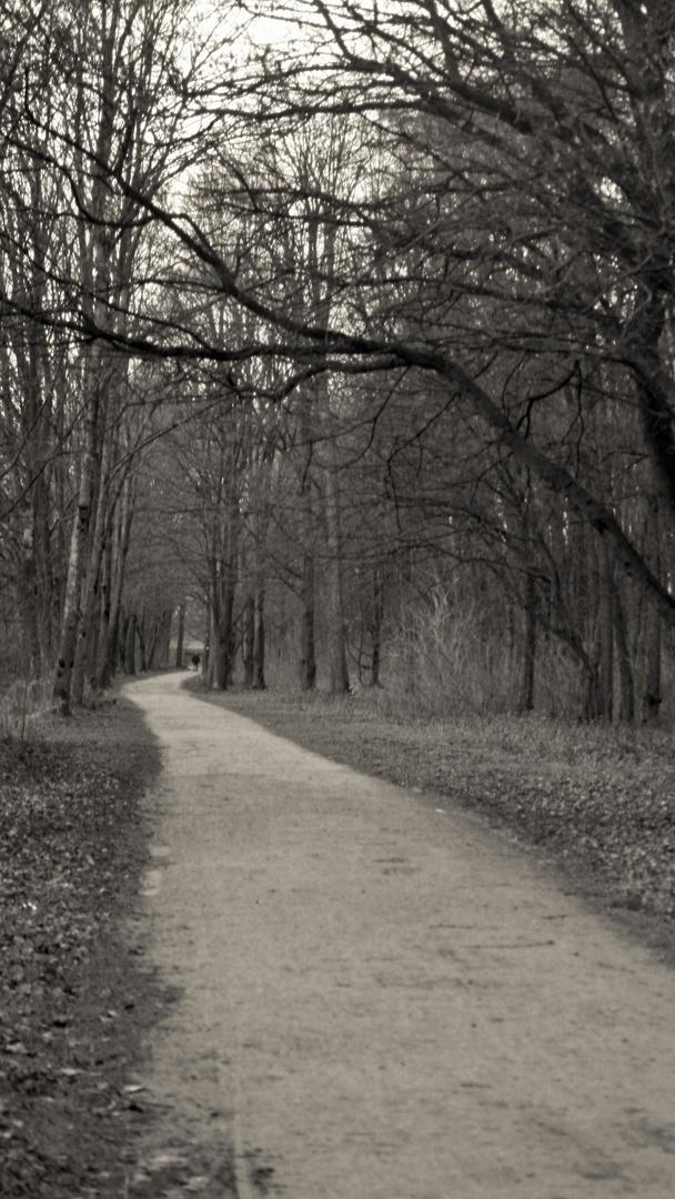 Waldweg / forest road