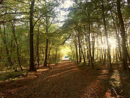Waldweg im Herbst bei Sonnenuntergang
