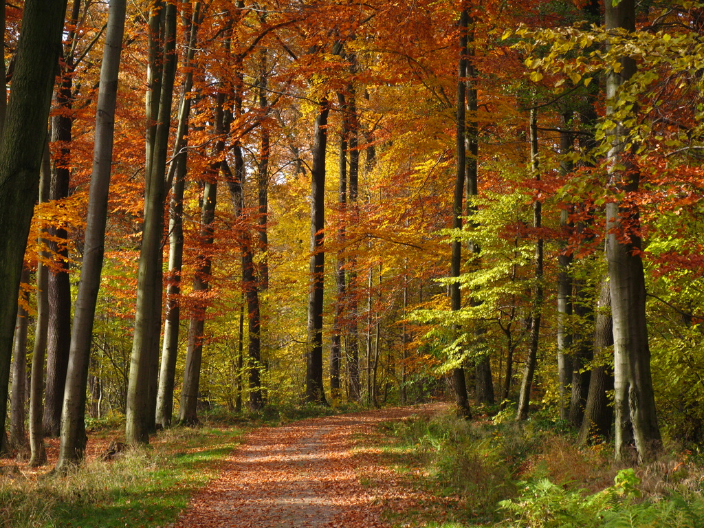 waldweg im herbst foto bild landschaft wald naturfotografie bilder auf fotocommunity. Black Bedroom Furniture Sets. Home Design Ideas