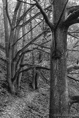 Waldweg im Kellerwald