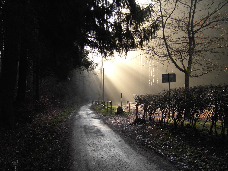 Waldweg im Morgenlicht
