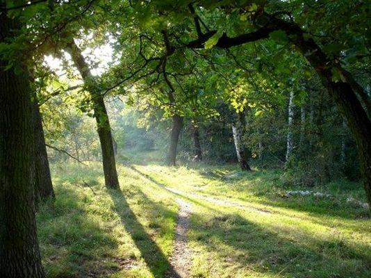 Waldweg im Nachmittagslicht