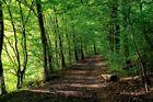 Waldweg im Spätsommer