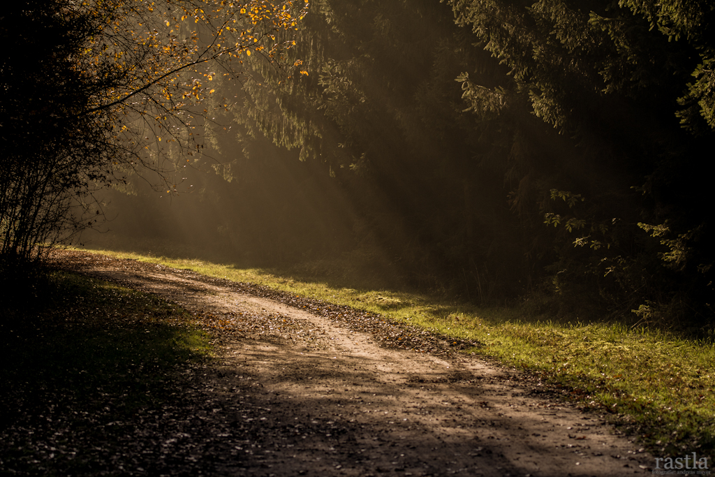 Waldweg im Warwer Sand