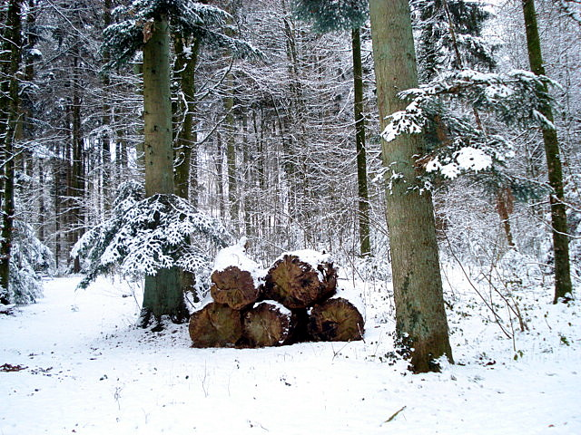 Waldweg im Winter 2010