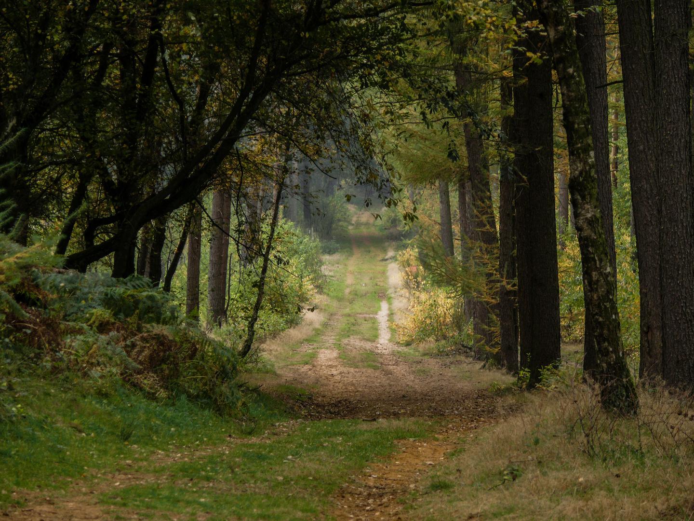 Waldweg in Schermbeck / NRW