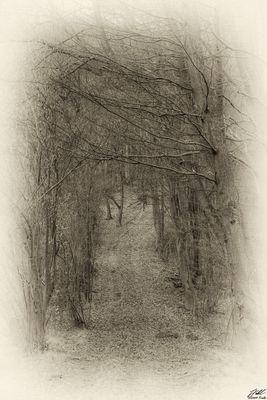 Waldweg in SW