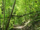 Waldweg zum Rhein