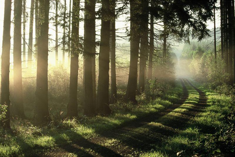 Waldweg zum Wolfstein