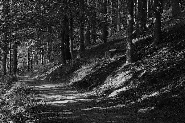 Waldwege (1)