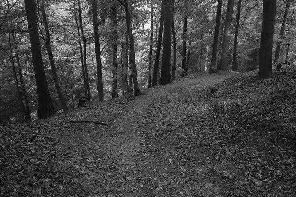Waldwege (2)