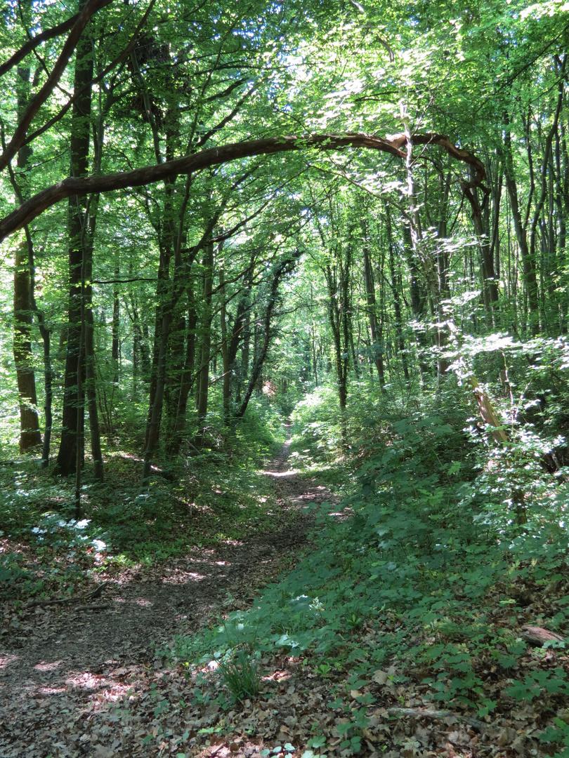 Waldwege 2